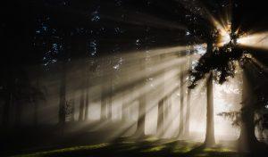 Bioforest promuove una cultura produttiva più sensibile all'ambiente.