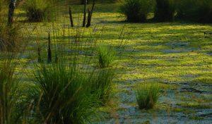 Progetto Risorgive del Vinchiaruzzo - Il ripristino di un habitat naturale